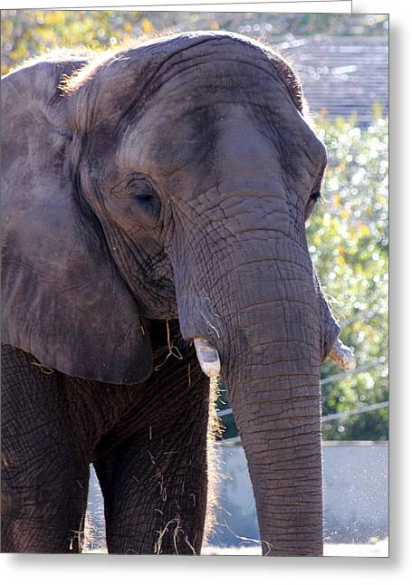 Blalock Greeting Cards - Ellie Greeting Card by Dana  Oliver