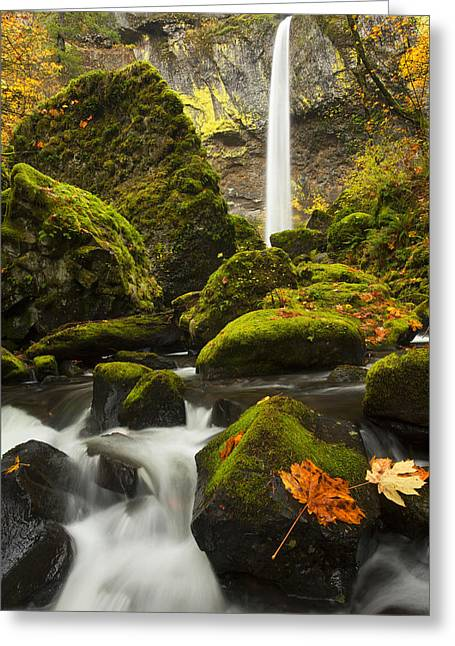 Moss Greeting Cards - Elowah Autumn Greeting Card by Mike  Dawson