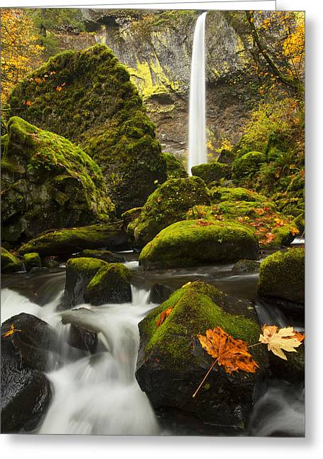 Elowah Autumn Greeting Card by Mike  Dawson