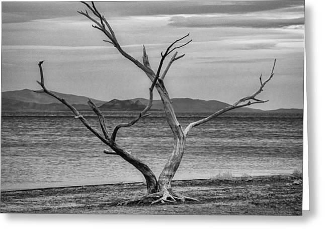Landscape Photographer Greeting Cards - Embrace Greeting Card by Kurt Golgart