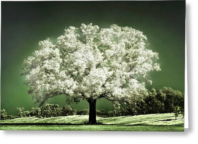 Magical Tree Greeting Cards - Emerald Meadow square Greeting Card by Hugo Cruz