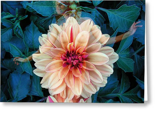 Floral Digital Art Digital Art Digital Art Greeting Cards - Emergence Greeting Card by Torie Tiffany