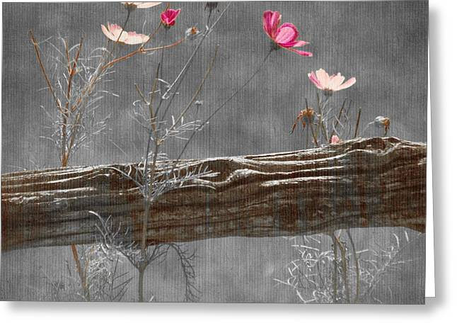 Emerging Greeting Cards - Emerging Beauties - v38at1 Greeting Card by Variance Collections