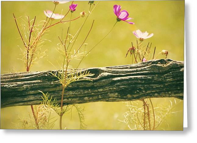 Lime Green Greeting Cards - Emerging Beauties - y11a Greeting Card by Variance Collections
