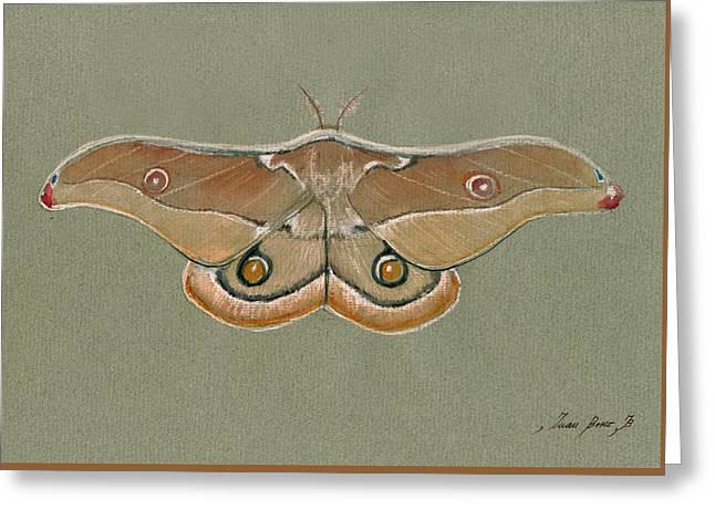 Emperor Gum Moth Greeting Card by Juan Bosco