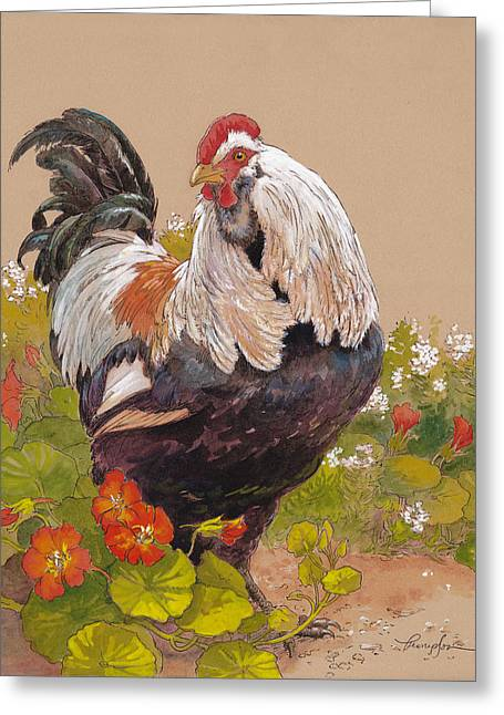 Cockerel Greeting Cards - Emperor Norton Greeting Card by Tracie Thompson
