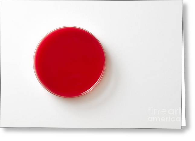 Science Greeting Cards - Empty Petri Dish Greeting Card by George Mattei
