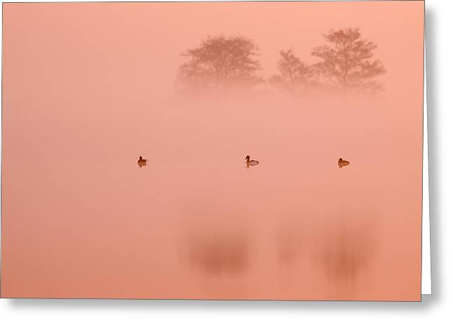 Pinkish Greeting Cards - Empty Spaces IV Greeting Card by Roeselien Raimond