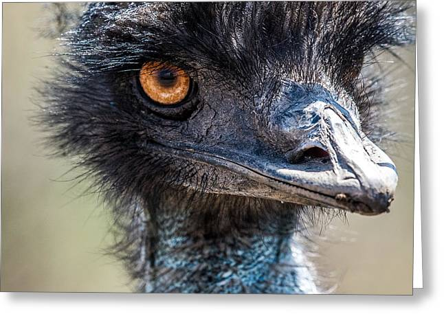 Ostrich Feathers Photographs Greeting Cards - Emu Eyes Greeting Card by Paul Freidlund