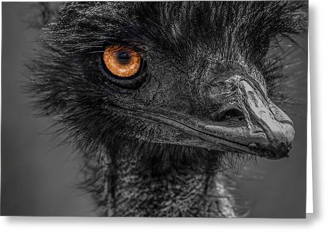 Ostrich Feathers Photographs Greeting Cards - Emu Greeting Card by Paul Freidlund