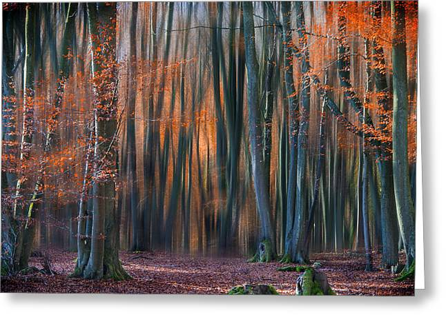 Enchanted Forest Greeting Card by Em-photographies