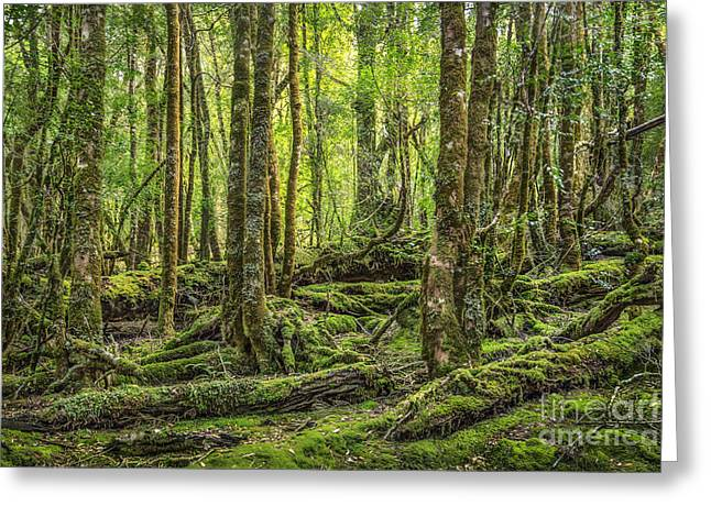 Moss Green Photographs Greeting Cards - Enchanted Forest Greeting Card by Evelina Kremsdorf