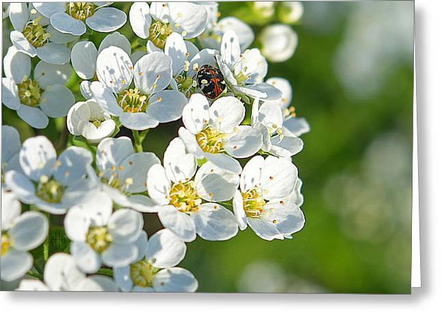 Faa Exclusive Greeting Cards - Encyclopedia of spring Image 14 Greeting Card by Irina Effa
