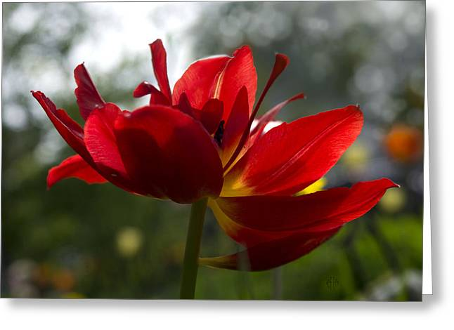 Faa Exclusive Greeting Cards - Encyclopedia of spring Image 5 Greeting Card by Irina Effa