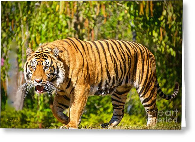 Wildcats Paintings Greeting Cards - Endangered Species Greeting Card by Judy Kay