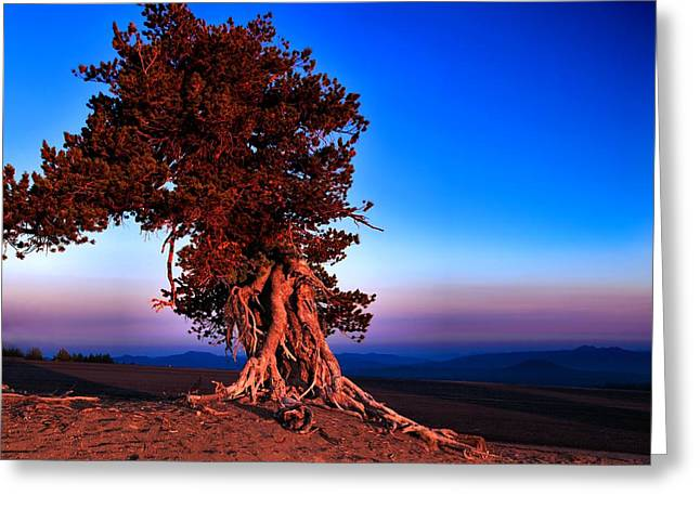 Whitebark Pines Greeting Cards - Endurance Greeting Card by Laura Ragland