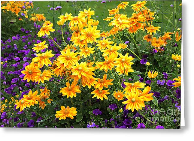 Energizing Yellow Orange And Purple Flowers Greeting Card by Carol Groenen
