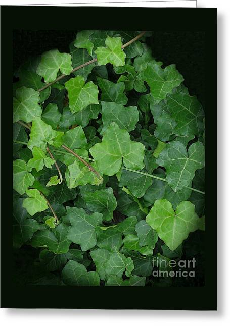Greeting Cards - English Ivy Greeting Card by Ann Horn
