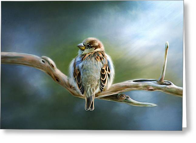 Sparrow Greeting Cards - English Sparrow Greeting Card by Renee Dawson
