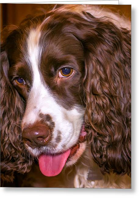 Spaniel Digital Art Greeting Cards - English Springer Spaniel - Paint Greeting Card by Steve Harrington