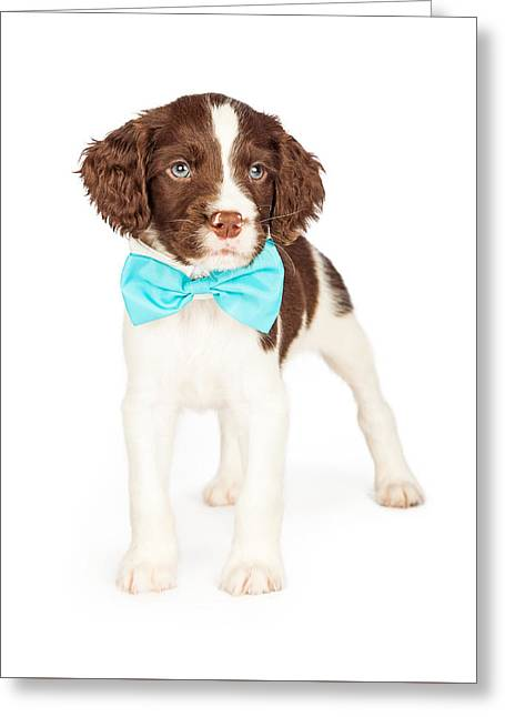 English Springer Spaniel Puppy Wearing Bow Tie Greeting Card by Susan Schmitz