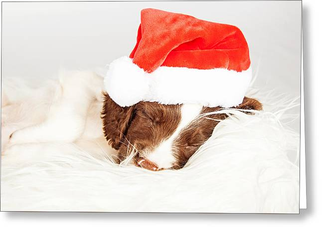 English Springer Spaniel Puppy Wearing Santa Hat While Sleeping Greeting Card by Susan Schmitz