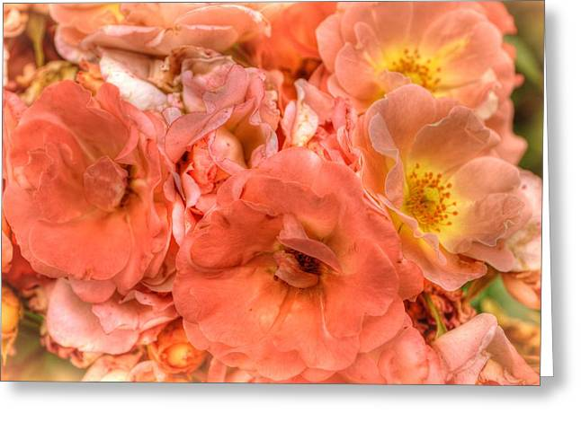 Engulfing Greeting Cards - Engulfed in roses Greeting Card by Linda Covino