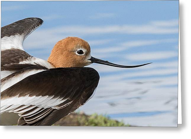 Glassy Wing Greeting Cards - Enjoying Life Greeting Card by Vicki Stansbury