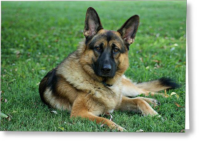 Alsatian Greeting Cards - Enjoying the Day Greeting Card by Sandy Keeton