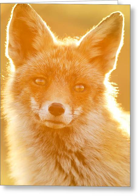 Enlightened Fox Greeting Card by Roeselien Raimond