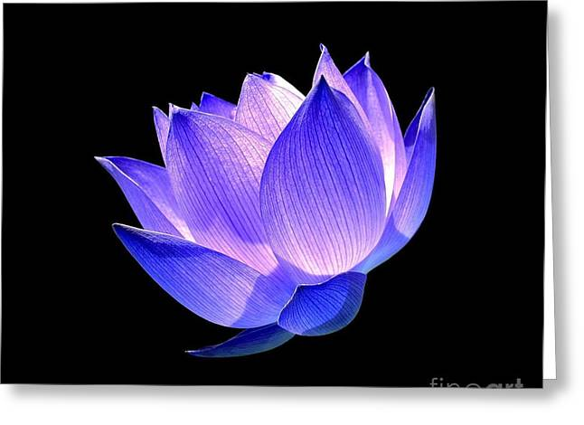 Lotus Flowers Greeting Cards - Enlightened Greeting Card by Photodream Art