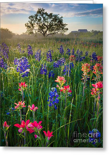 Pasture Scenes Greeting Cards - Ennis Morning Greeting Card by Inge Johnsson