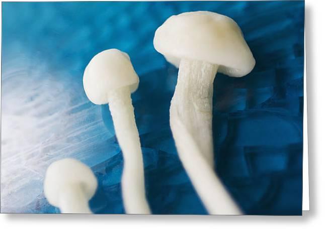 Enokitake Mushrooms Greeting Card by Ray Laskowitz - Printscapes