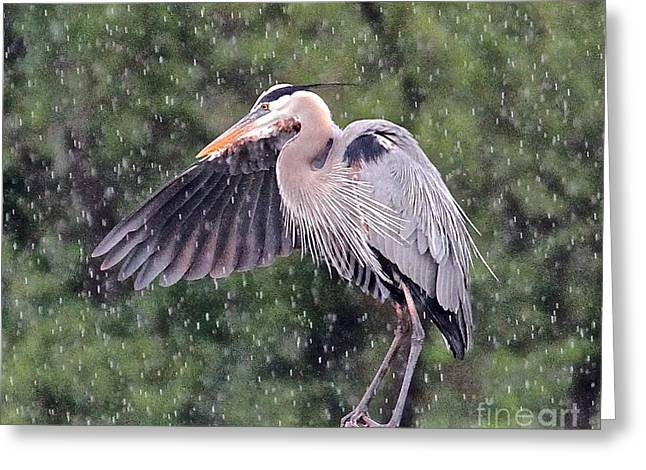 Bird Summit Greeting Cards - Enough With the Rain Greeting Card by Robin Erisman