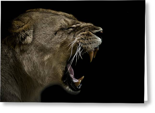 Lioness Greeting Cards - Enraged Greeting Card by Paul Neville