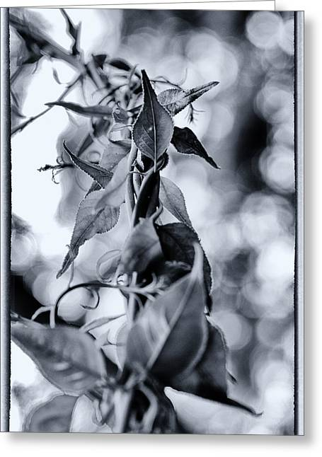Vine Leaves Greeting Cards - Entangled Greeting Card by Scott  Wyatt