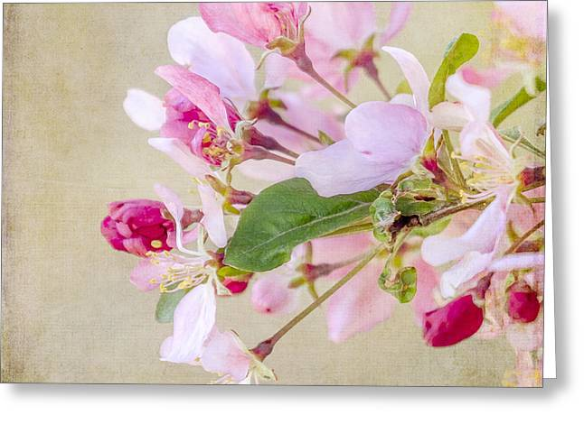 Flower Blossom Greeting Cards - Enticement Greeting Card by Betty LaRue