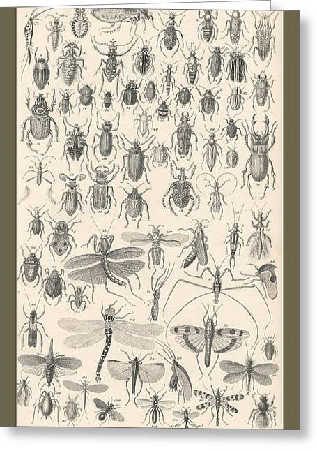 Entomology Greeting Card by Captn Brown