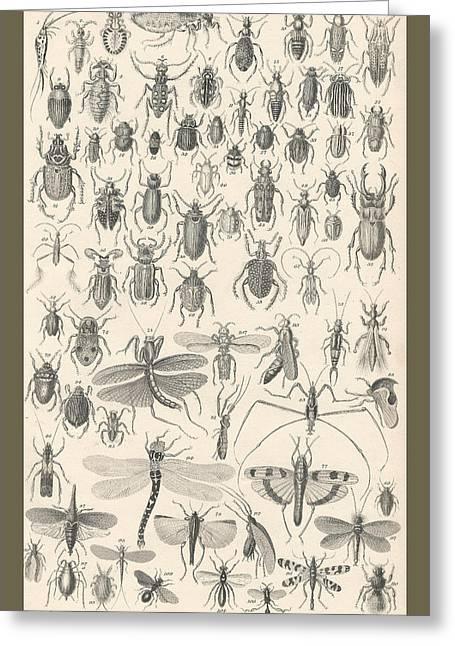 Thomas Drawings Greeting Cards - Entomology Greeting Card by Captn Brown