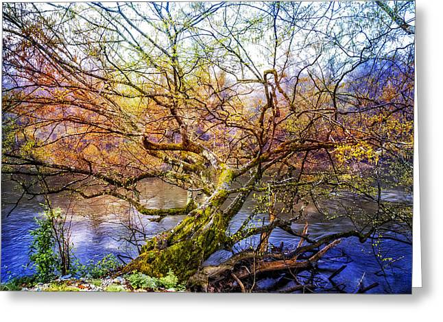 Fall Trees Greeting Cards - Entwined Greeting Card by Debra and Dave Vanderlaan