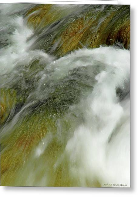 Enveloping Softness Greeting Card by Donna Blackhall