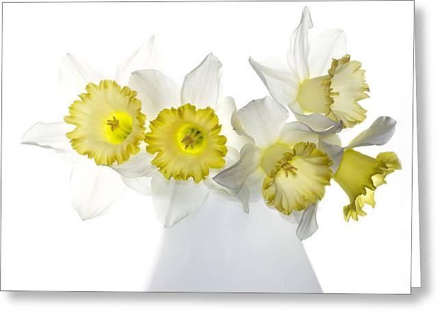 Daffodils Greeting Cards - Ephifany Greeting Card by Rebecca Cozart
