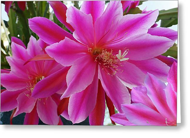 Orchid Cactus Greeting Cards - Epiphyllum Greeting Card by Ellen Henneke