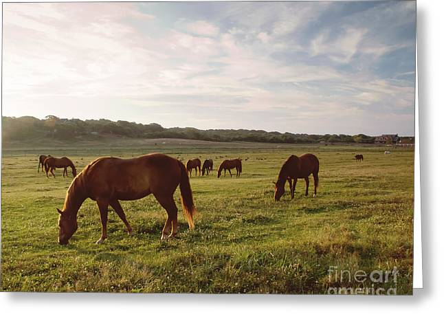 Equestrian Morning Greeting Card by A New Focus Photography