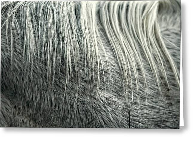 Equine Hair Greeting Card by Todd Klassy
