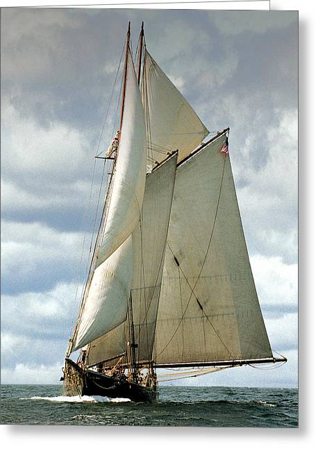 Recently Sold -  - Schooner Greeting Cards - Ernestina Greeting Card by Fred LeBlanc