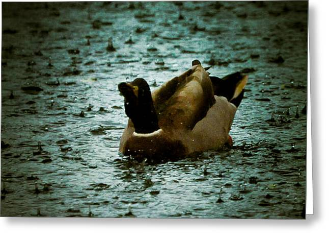 Escaping the Rain Greeting Card by Loriental Photography