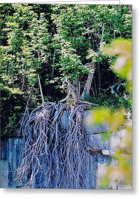 Tree Roots Greeting Cards - Escarpment Cedars Greeting Card by John Turner