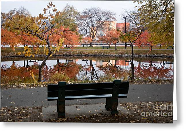 Charles River Greeting Cards - Esplanade View Greeting Card by Susan Cole Kelly