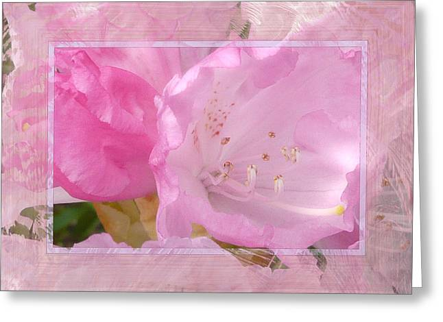 Pink Rhodies Greeting Cards - Essence of Pink Greeting Card by Lori Seaman
